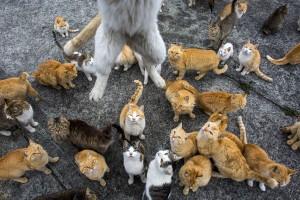 Kedi Adası