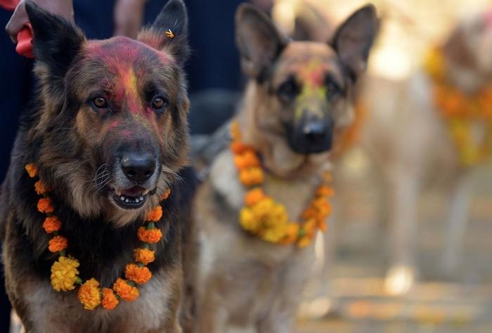 Köpek Şenliği