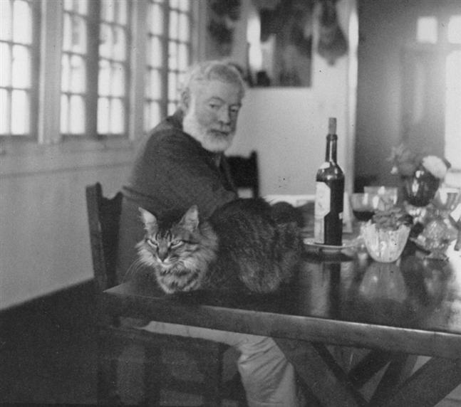 Kedilerin Hemingway'i