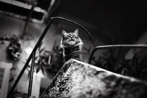 the_town_of_cats__by_galaxiesanddust-d6mfrw6