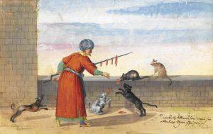 islam ve kedi