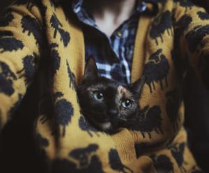 üzgün kediler gazeli