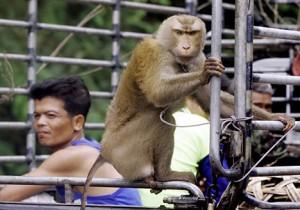 afedersin karınca seni maymun zannettim