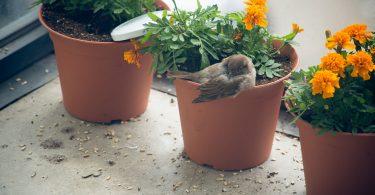 hüzünkovankuşu