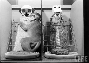 hayvan özgürleşmesi